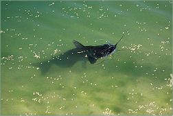 Catfish Feeding