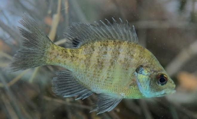 Fish Hatchery & Farm - Feeder Fish & Fish Stocking in Texas