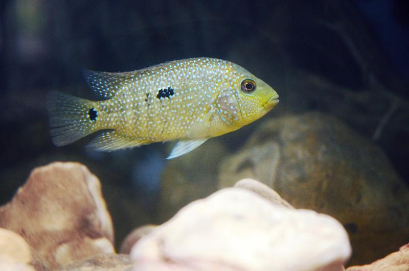 sunfish6