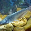 What is Fish Stocking?